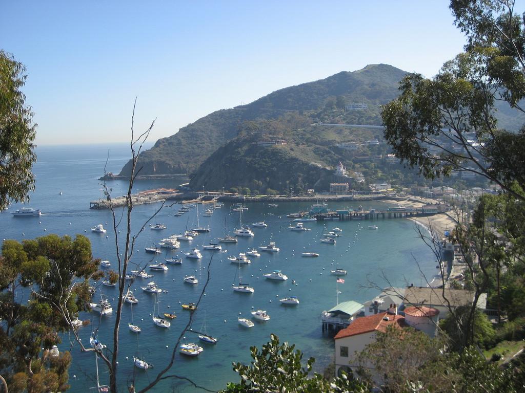Catalina Island photo
