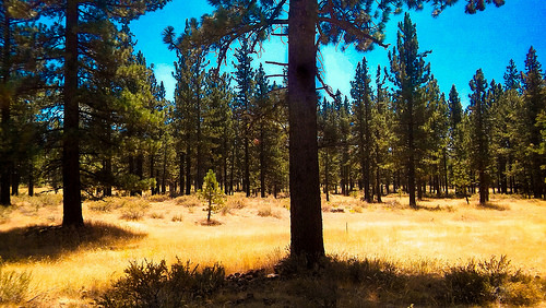 Plumas National Forest photo