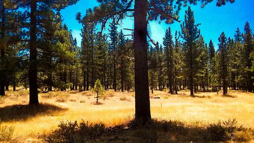 Plumas National Forest photo