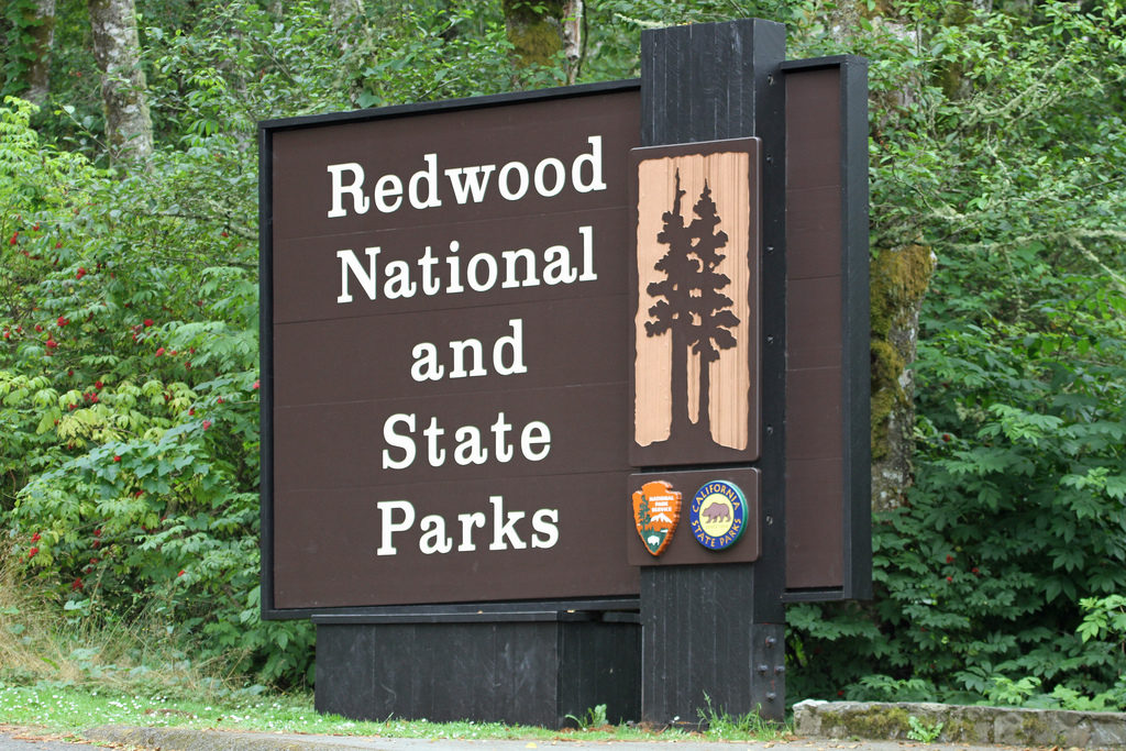 redwood national state park